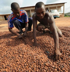 Workers at a cocoa cooperative for whole