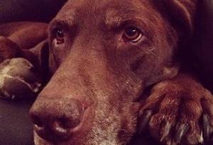 cane cioccolato