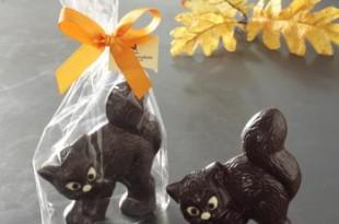 gatti cioccolato