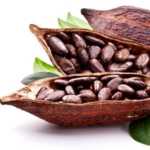 Semi di cacao dove trovarli e come usarli