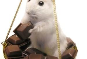 I criceti possono mangiare il cioccolato